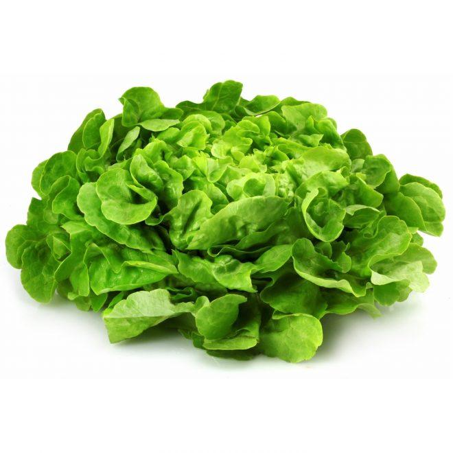 Maraicher local Guérande Légumes fruits salade feuille de chêne verte