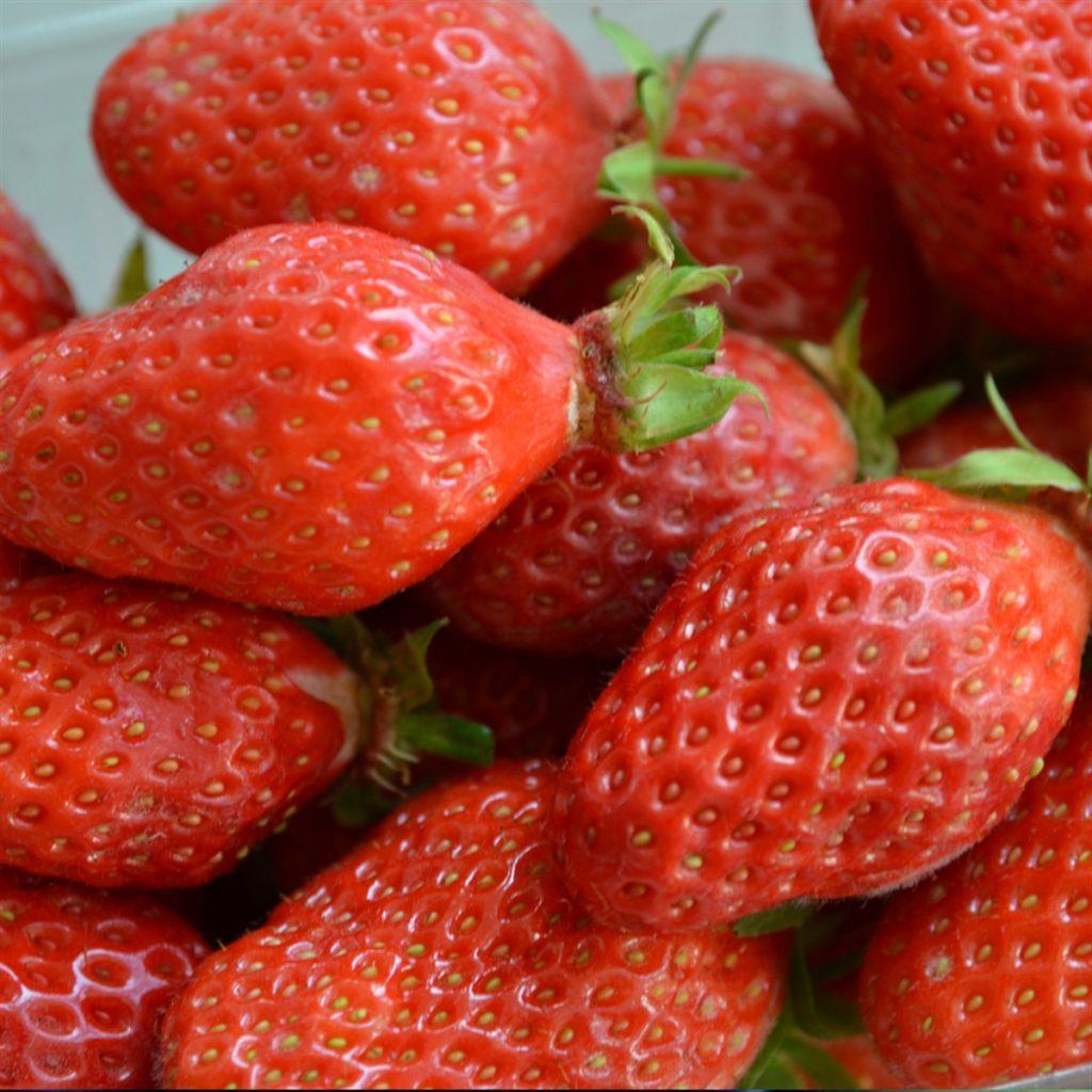 Maraicher local Guérande Légumes fruits fraises guariguette