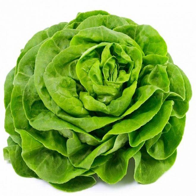 Maraicher local Guérande Légumes fruits laitue verte