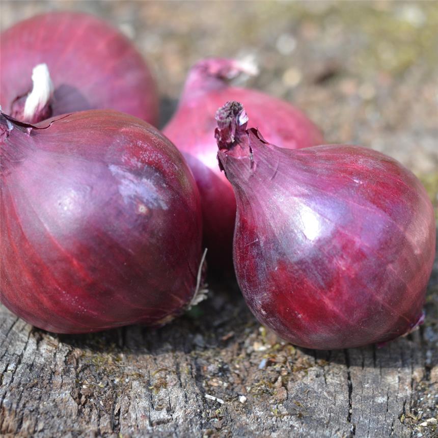 Maraicher local Guérande Légumes fruits oignon rouge