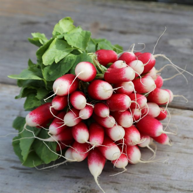 Maraicher local Guérande Légumes fruits radis rose